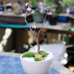 Jumfulの遊び場庭能花園のミニ盆栽作り体験